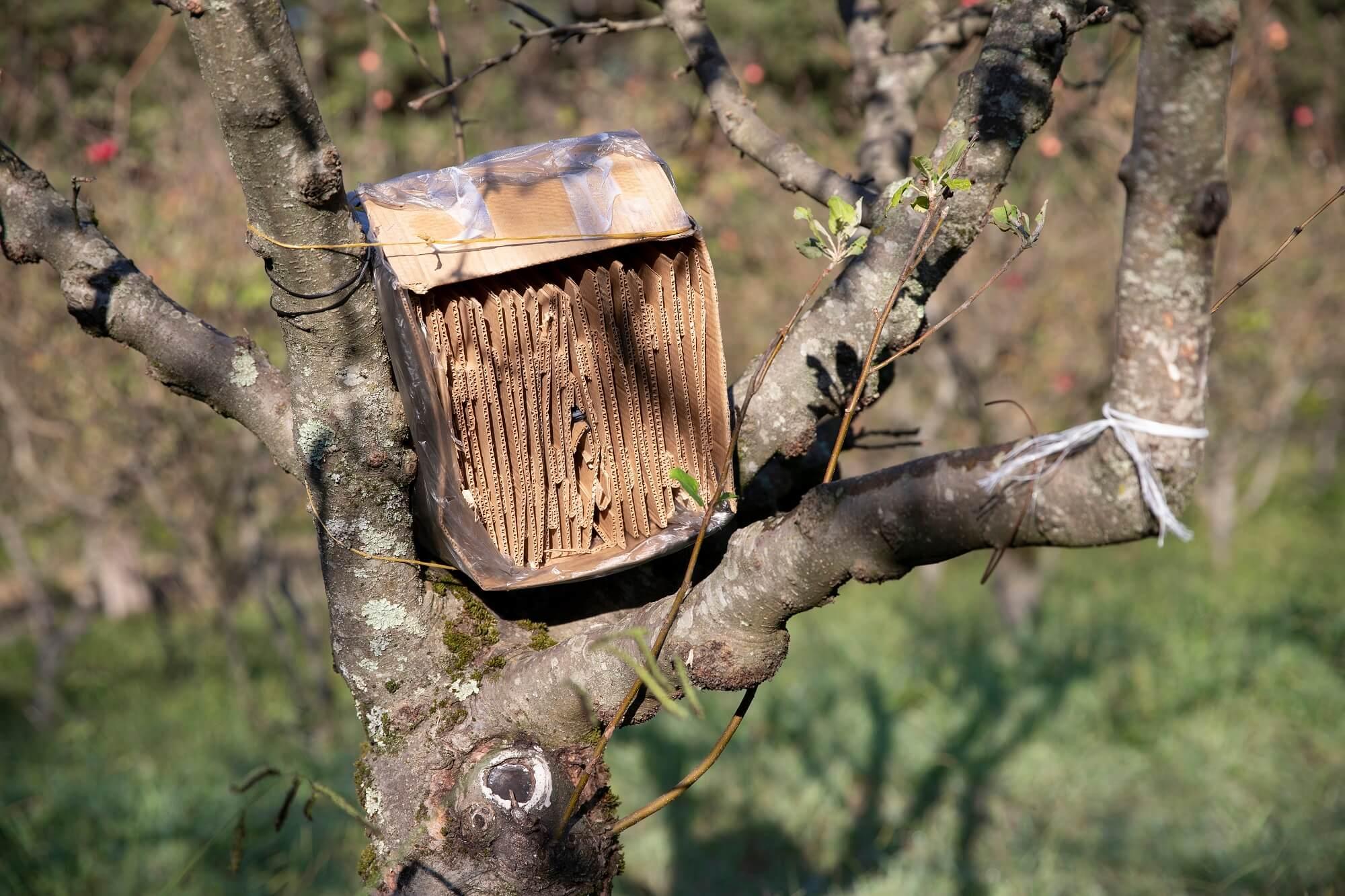 Фальшловушка на коричнево-мраморного клопа